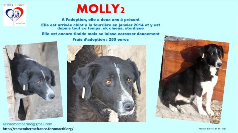 MIA (ex MOLLY2) - PLUS DE 2 ANS DE BOX - Femelle croisée de taille moyenne, née en 2013 (PASCANI) - REMEMBER ME LAND - Adoptée par Nathalie (68) Molly210