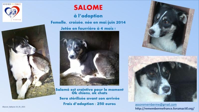 SALOME- jeune femelle taille moyenne née environ en septembre 2014 (Pascani) - en FA chez  patosh (93) Salome10