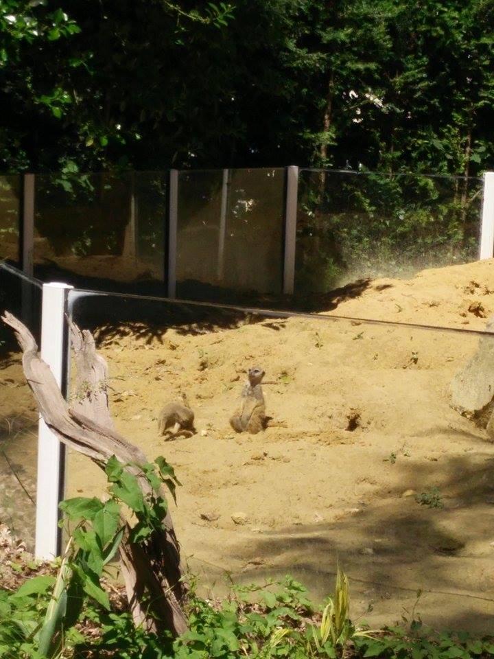 Visite au Zoo de Thoiry dans le 78 Rendon10