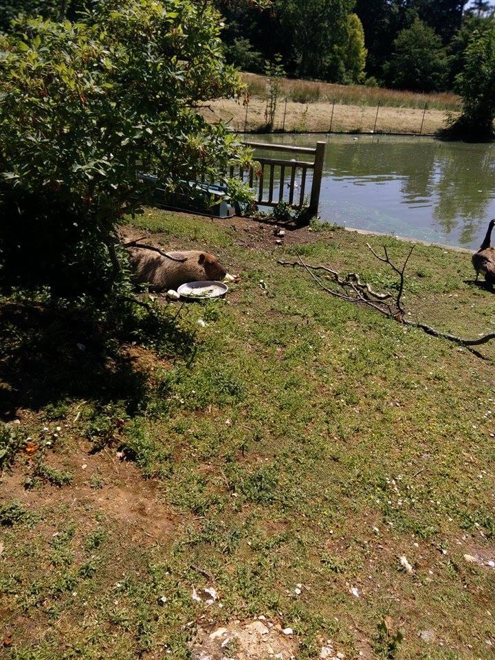 Visite au Zoo de Thoiry dans le 78 Rendon11