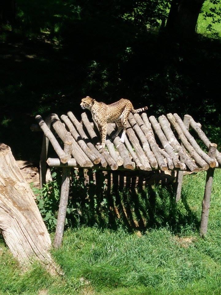 Visite au Zoo de Thoiry dans le 78 Rendon12