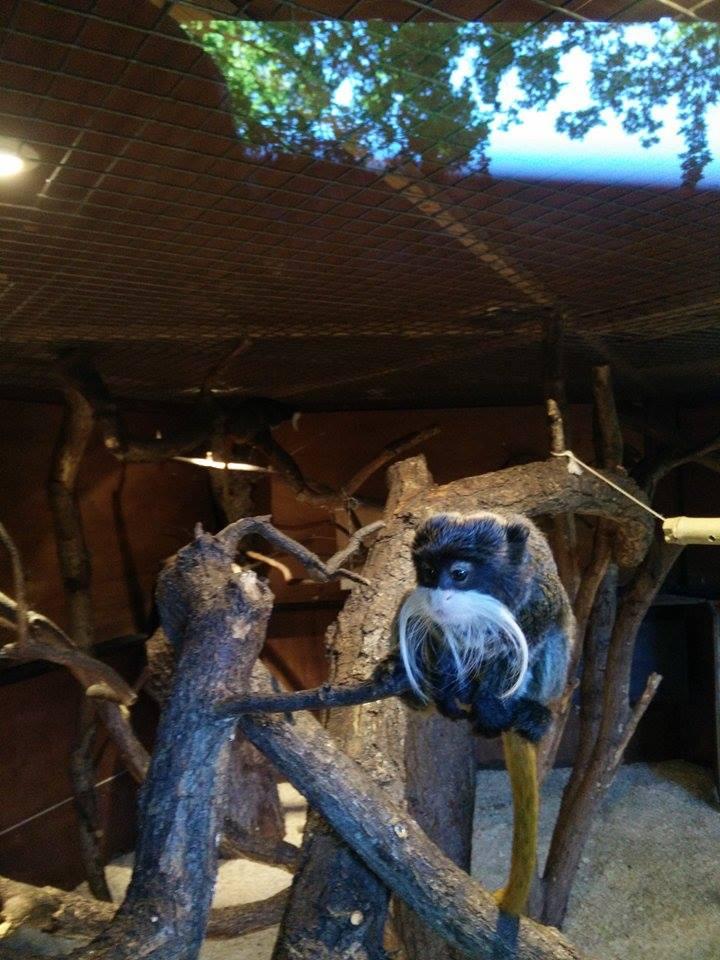 Visite au Zoo de Thoiry dans le 78 Rendon13