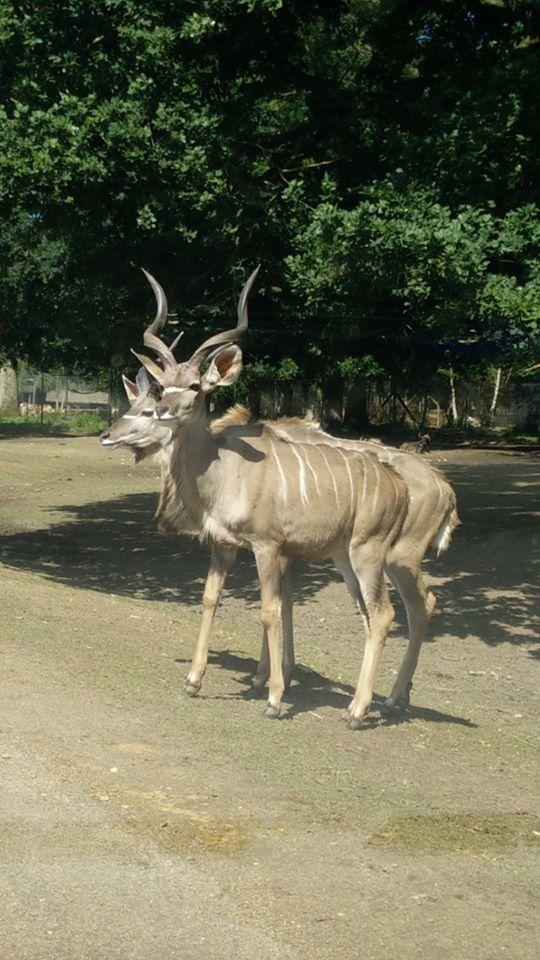 Visite au Zoo de Thoiry dans le 78 Safari10