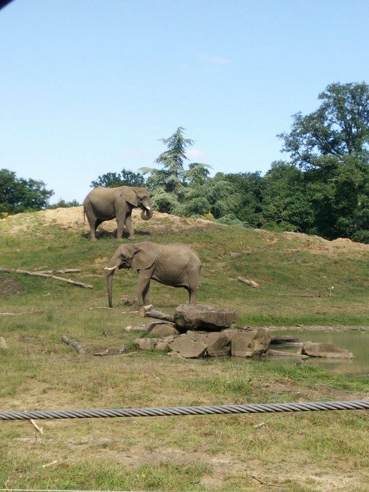 Visite au Zoo de Thoiry dans le 78 Safari11
