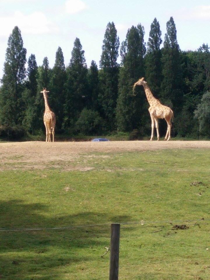 Visite au Zoo de Thoiry dans le 78 Safari12