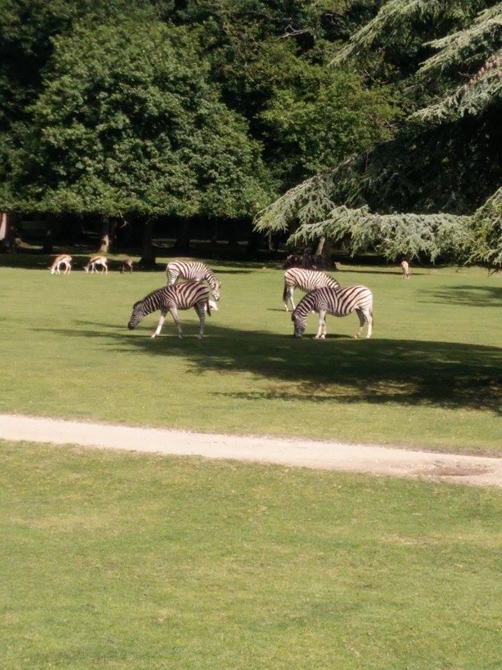 Visite au Zoo de Thoiry dans le 78 Safari13