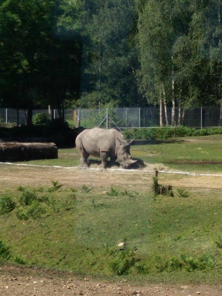 Visite au Zoo de Thoiry dans le 78 Safari15