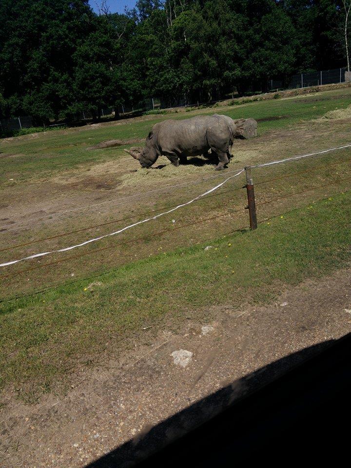 Visite au Zoo de Thoiry dans le 78 Safari16