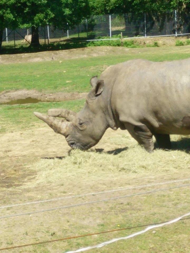 Visite au Zoo de Thoiry dans le 78 Safari17