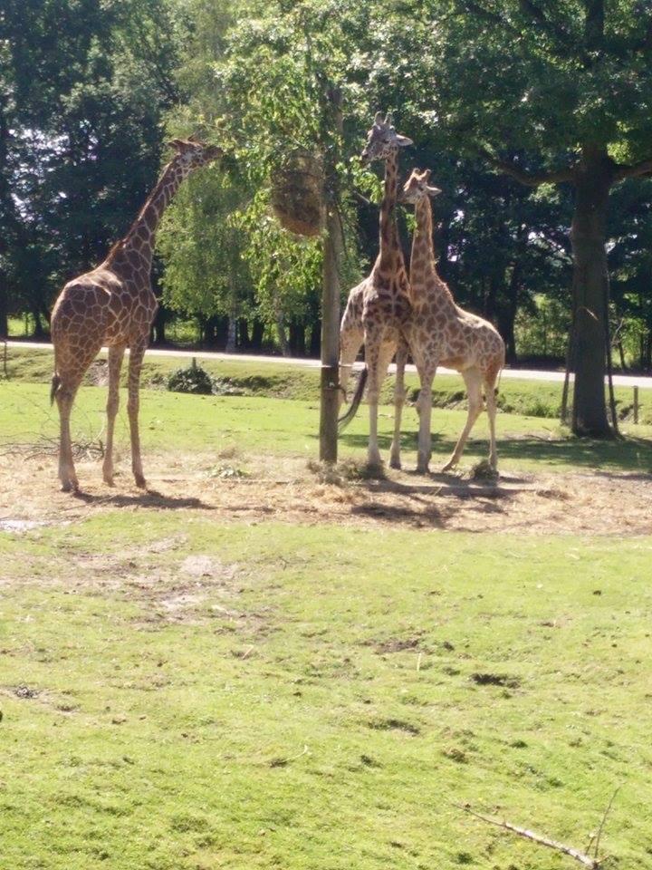 Visite au Zoo de Thoiry dans le 78 Safari18
