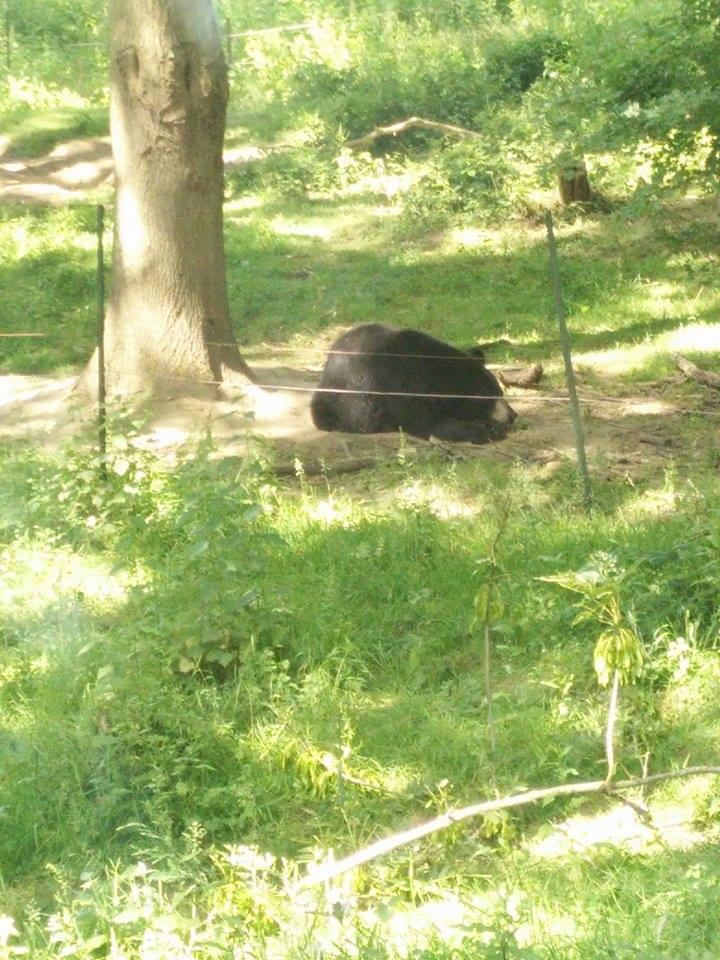Visite au Zoo de Thoiry dans le 78 Safari22