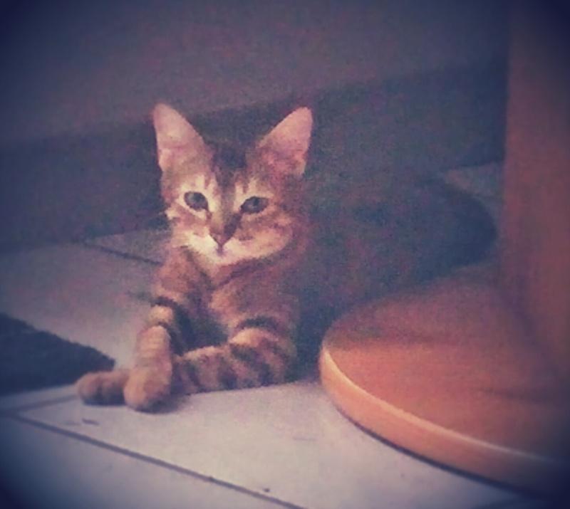 Des nouvelles de Jahna (ex Lolita) 20150610