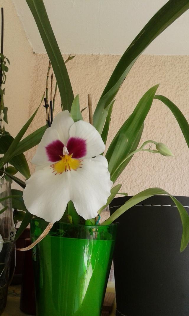 Floraisons diverses 20150510
