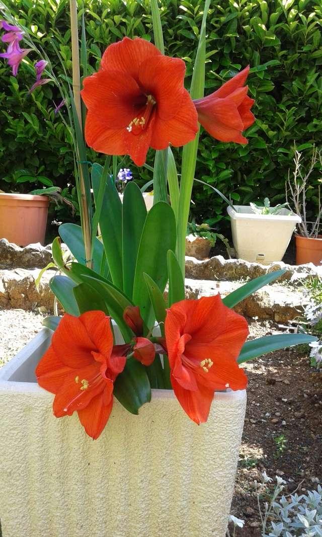 Floraisons diverses 20150512