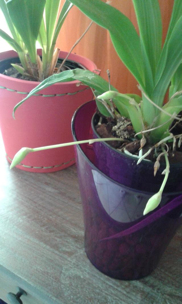 Floraisons diverses 20150514