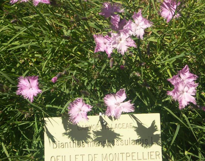 """Concours """"Les fleurs éclosent à l'ombre"""" Oeille14"""