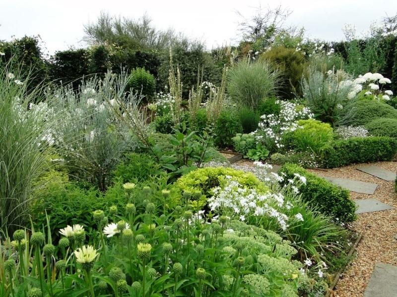 massifs en blanc - fleurs et feuillages : belles associations  Plouyc16