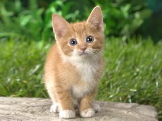 Ako sa dnes máš? 6 - Stránka 6 Cat10