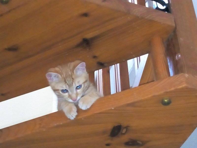 Leko (devenu Imothep) chaton roux né le 10 Avril 2015 11911410