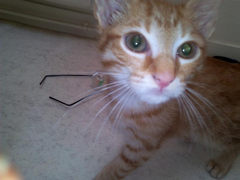 Leko (devenu Imothep) chaton roux né le 10 Avril 2015 Img_2072