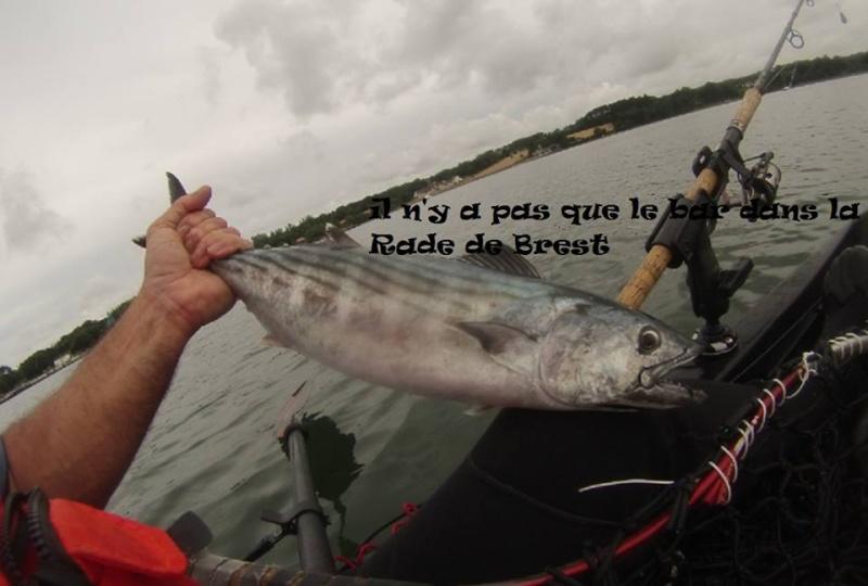 Casting jig ( pêche aux lieus et bonites) 11745711