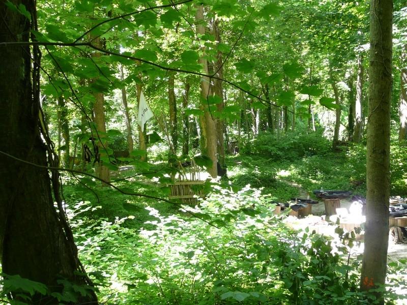 Photo du terrain en été  P1060623