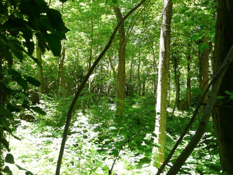 Photo du terrain en été  P1060625