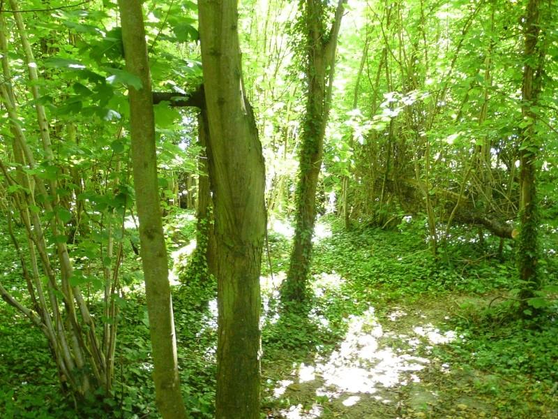 Photo du terrain en été  P1060626