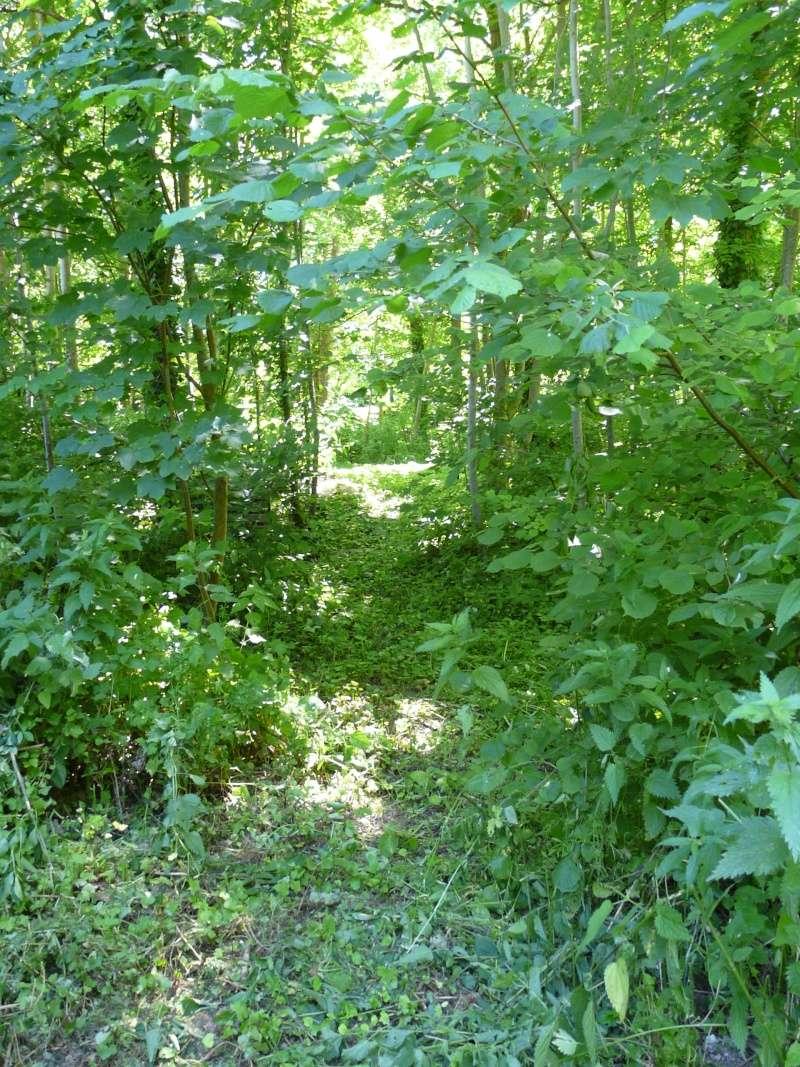Photo du terrain en été  P1060628
