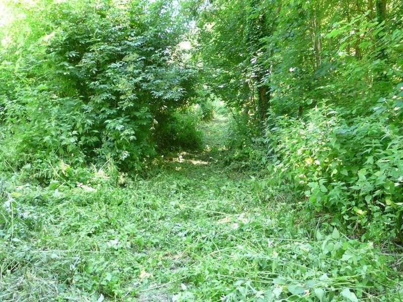 Photo du terrain en été  P1060629