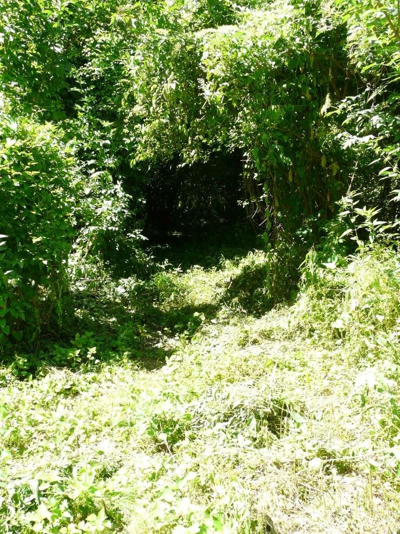 Photo du terrain en été  P1060630