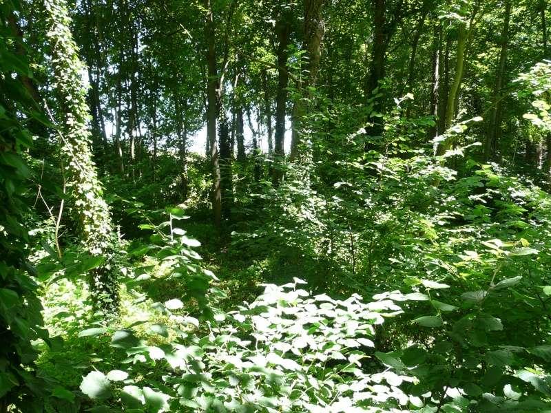 Photo du terrain en été  P1060631