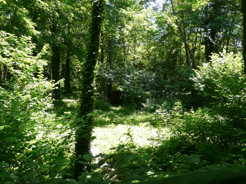 Photo du terrain en été  P1060632