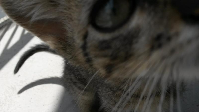 Link, mâle type européen tigré né 1er mai 2015 - Page 2 20150711