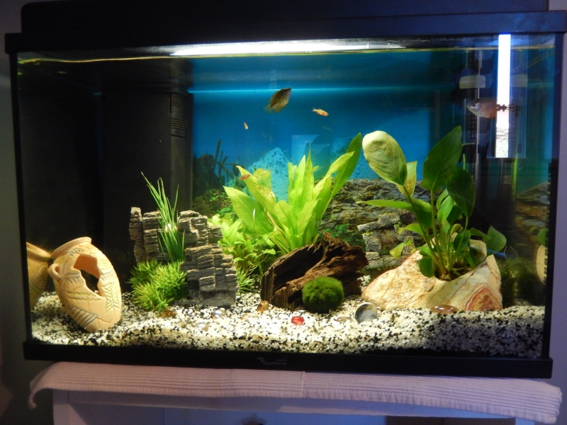Evolution de mon aquarium / mes debut en aquascaping / question poissons  Dscn1210