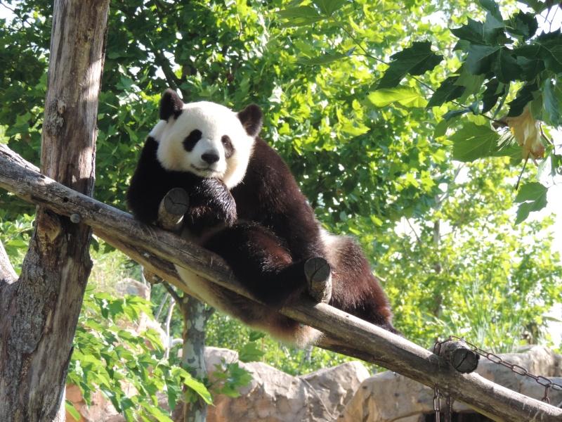 Pandas et Koalas  Dscn0912