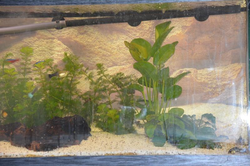 Plantes qui perdent de leur couleur  Dsc_0910