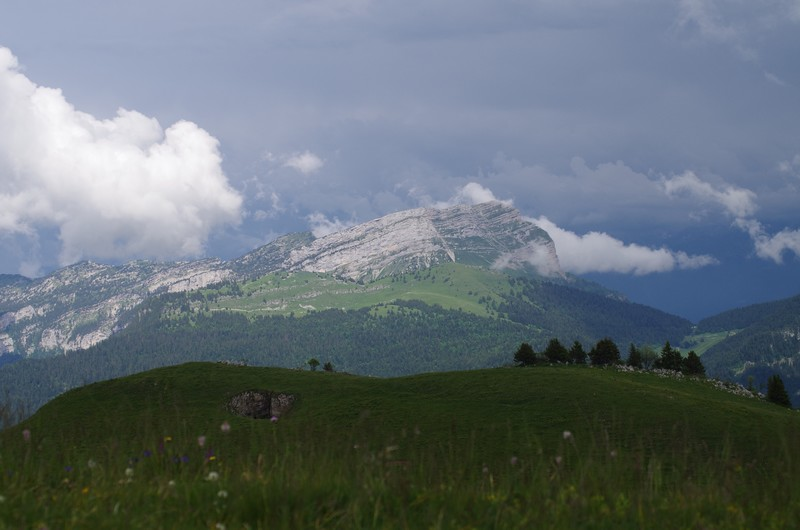 Gymnadenia austriaca Imgp4410