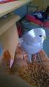 voici mon petit nouveau <3 Wp_20111