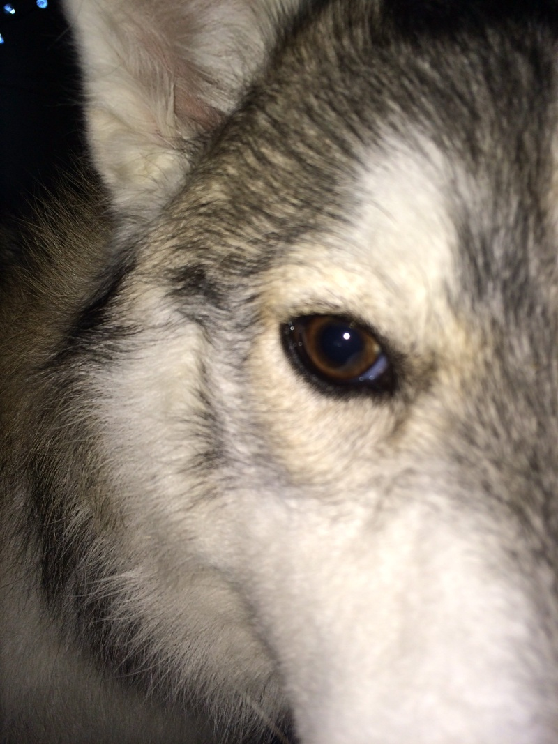 White dot/speck on eye.. Photo_37