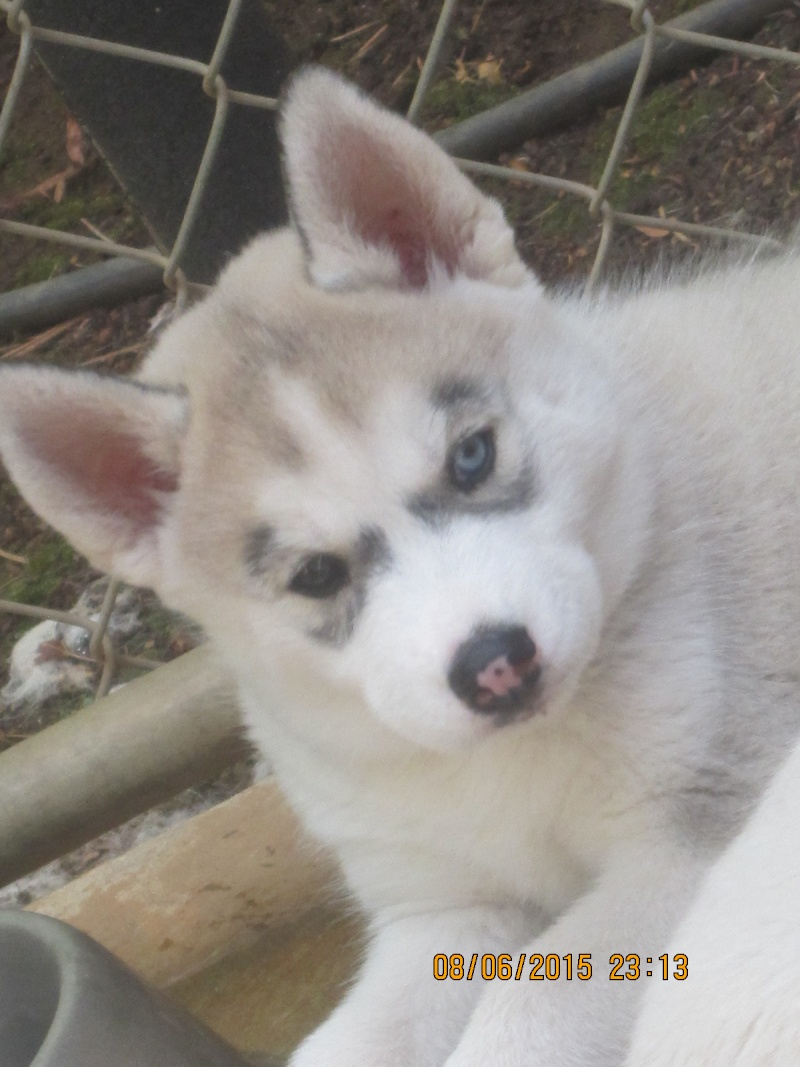 I get my puppy in less than 3 weeks! 87210