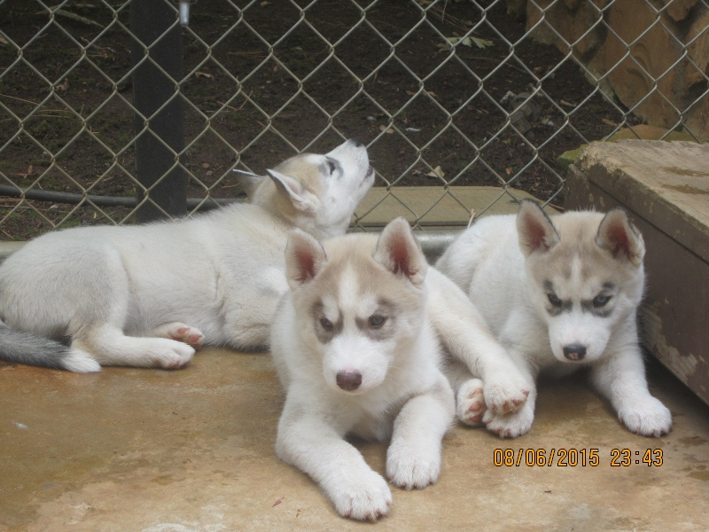 I get my puppy in less than 3 weeks! 88010