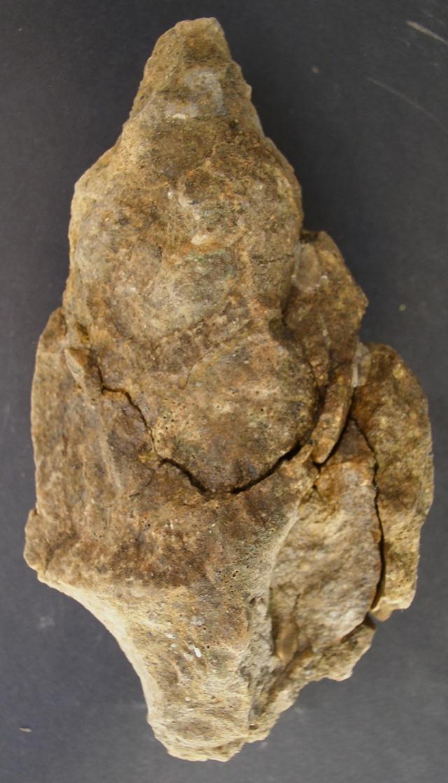 XXL fragment ressemble Tudicla P1010019