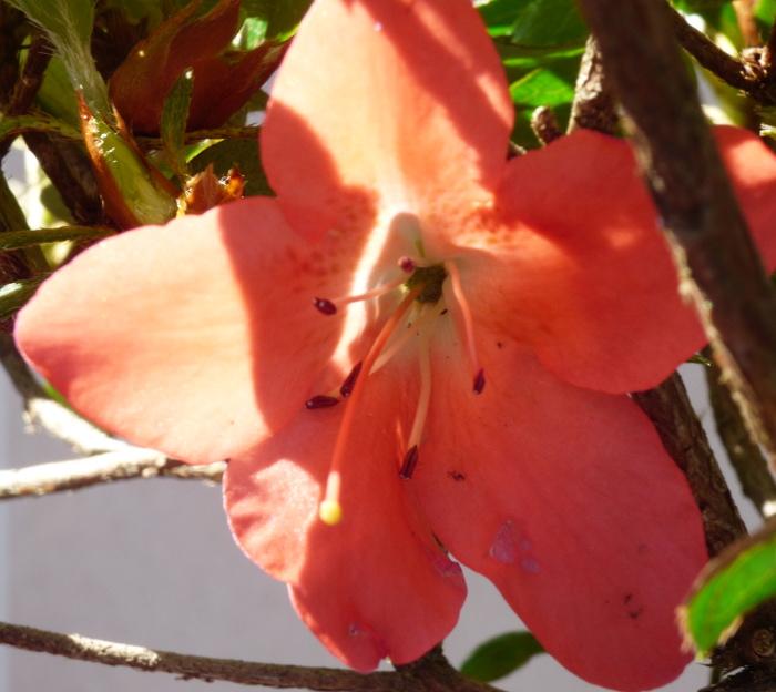 le club émeraude bonsaï  expose le 6 et 7 juin P1030112