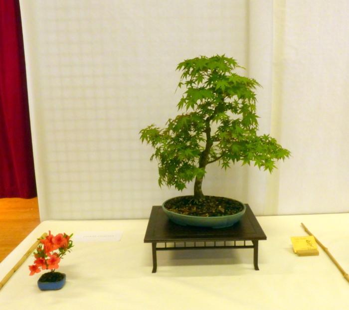 le club émeraude bonsaï  expose le 6 et 7 juin P1030310