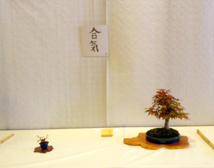 le club émeraude bonsaï  expose le 6 et 7 juin P1030316
