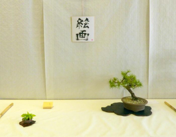 le club émeraude bonsaï  expose le 6 et 7 juin P1030317