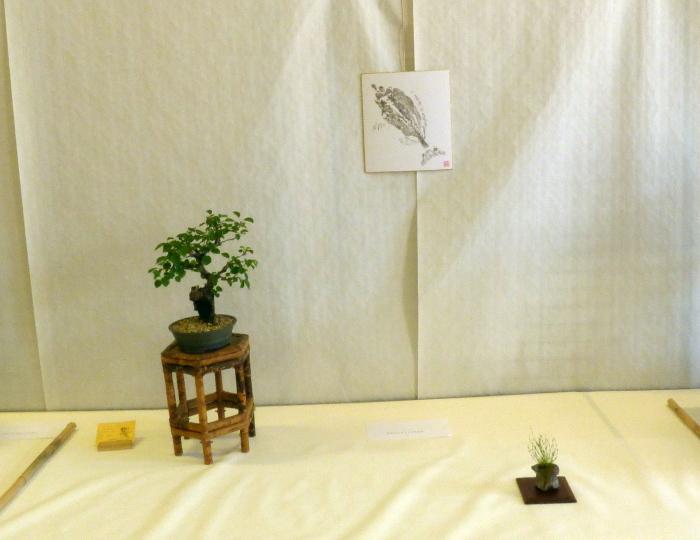 le club émeraude bonsaï  expose le 6 et 7 juin P1030318