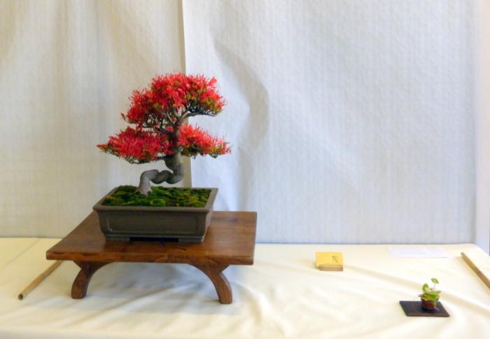 le club émeraude bonsaï  expose le 6 et 7 juin P1030319