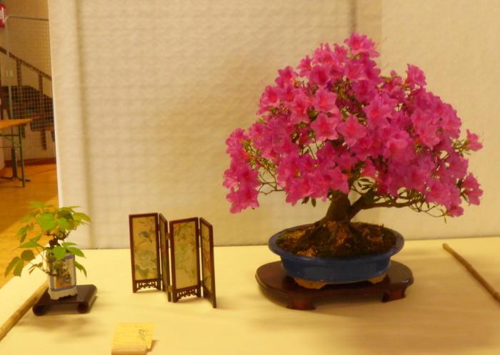le club émeraude bonsaï  expose le 6 et 7 juin P1030330